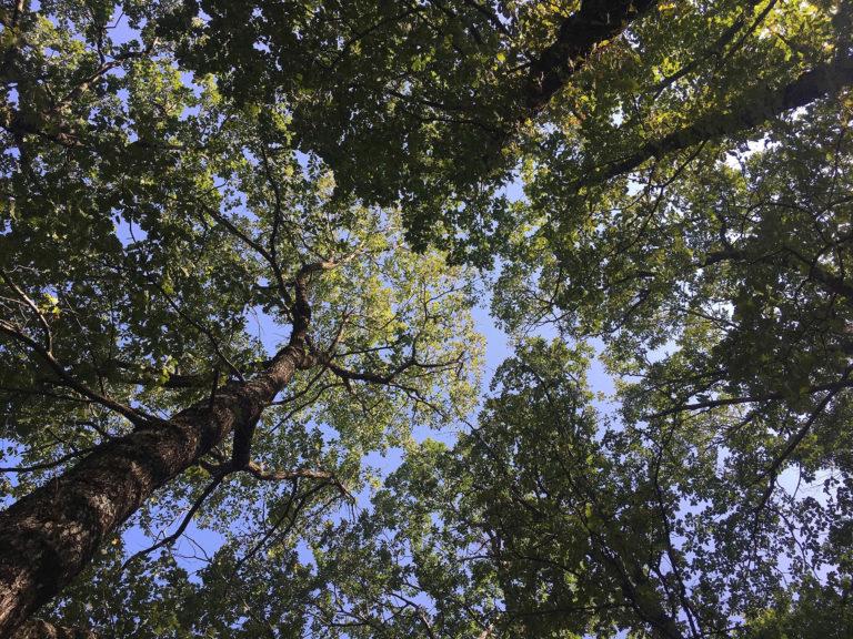 2019-Themes-Marche-Meditation-ZenAventures-Ines-Thoms-004