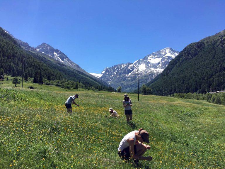 2020 Randonnée Plantes sauvages comestibles à la Cabane de la Tsa Val d'Hérens avec Inès Thoms de Zenaventures 1